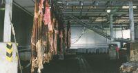 WET SALTED COW HIDES / WET SALTED SHEEP SKIN / WET SALTED PIG SKIN
