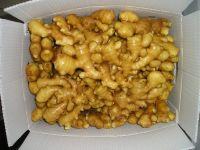 Best Price fresh fat ginger good for sale