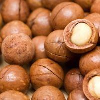 Macadamia Nut Without and in Shell / Organic Macadamia Nuts and Kernels