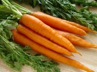 Fresh Carrots - Competitive and Good Quality