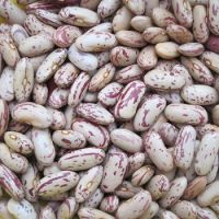 Light Speckled Kidney Beans/red sugar bean/Pinto bean
