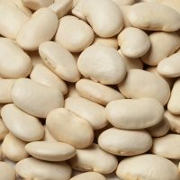 BIG WHITE KIDNEY BEAN/ LARGE WHITE KIDNEY BEAN/ LIMA BEAN