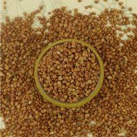 Wholesale and Arganic Buckwheat Bulk