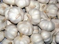 100% Natural fresh White Garlic Pure Garlic Wholesales.