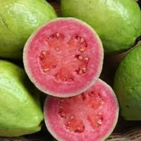 Rich Quality Good Taste Fresh Fruit Red Guava