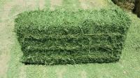 Sell Alfalfa Hay for Horses