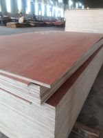 Plywood for furniture with 100% Euclyptus core