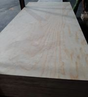 Pine veneer Face and Back Plywood