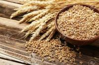 Great Wheat And Grains For Animal and Human Consumption