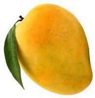 Fresh Alphonso and Kesar Mango