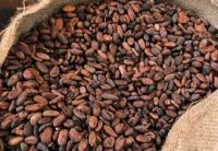African type cocoa beans for sale.Sun dried quality