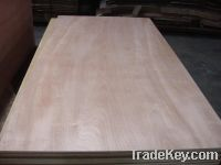 Sell Red Hardwood Plywood