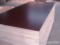 Sell Dynea Brown Film Faced Plywood