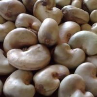 Selling Raw cashew