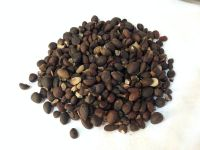Selling Palm Kernel Nuts