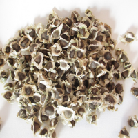 High Quality Nigerian Moringa Seeds