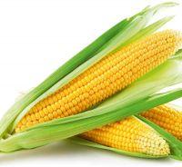 Yellow Corn Whole Seed