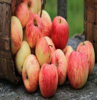 Fresh Fuji apple fresh apple fruit