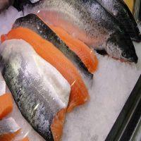 Fresh Frozen Salmon Fish for sale.