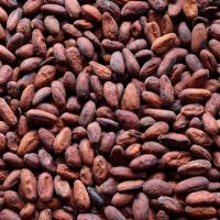 Top Quality West African Roasted Cocoa Beans From Cameroon