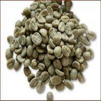 VIETNAM ROBUSTA GREEN COFFEE BEST QUALITY