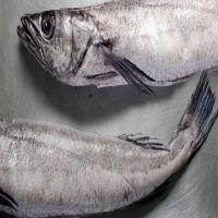 Fresh frozen Hake whole fish, Frozen Hake fish fillet hake