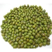 Green Mung Beans/Sprouting New Crop