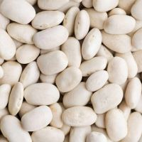 High Quality Light Speckled White red kidney bean