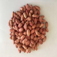 Wholesale High Quality Raw Bold Peanuts - Runner Variety Peanut