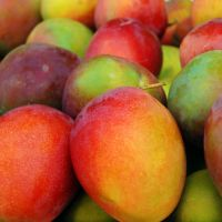 Fresh delicious mangoes for sale