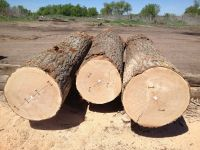 Pine Woods Logs