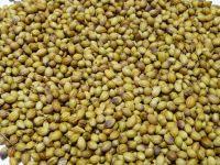 100% Natural Organic Coriander Seeds