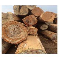 Timber Logs / Wood Teak Wood / Oak Wood Logs