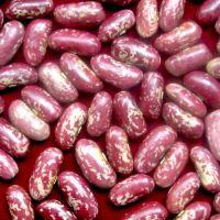 High Quality speckled light, Red, Black & White Kidney Beans