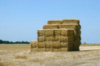 High Quality Animal Feed Alfalfa Hay
