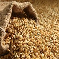 animal feed barley sale