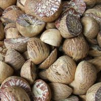 High quality f betel nut