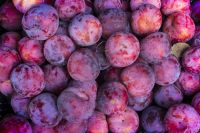 Fresh delicious sweet and sour plums
