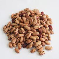 south Africa Light Speckled Kidney Beans