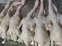 Clean Fresh Meat Roasted Boneless Frozen Whole Duck