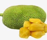 New crop fresh Jack Fruit