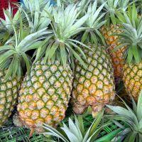 Grade A Fresh Pineapples
