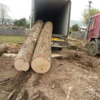 Cheap Kosso/ Doussie / Sapelli / Tali / Teak / Pachyloba Wood Logs - Hight Quality And Best Wood Logs