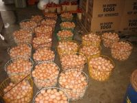Fresh White and Brown Table Egg / Fresh White and Brown Eggs / Chicken Eggs