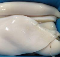 Frozen Giant Squid Fillet
