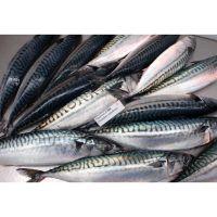 seafrozen hgt frozen fresh fish pacific mackerel