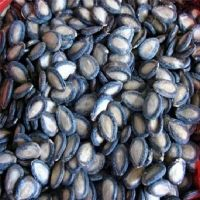 Melon/Watermelon Seeds ( White, Black, Red ) For Sale