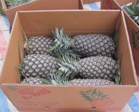 Fresh Sweet Pineapples