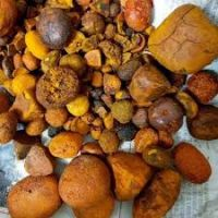 Cow Ox Gallstone