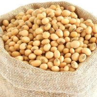 %100 Pure Yellow Soybeans/Soybean/Soya Bean/Soybeans for Sale